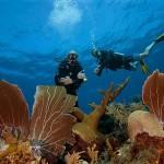 Duikvakantie Bonaire Fun - Vakantieduiker
