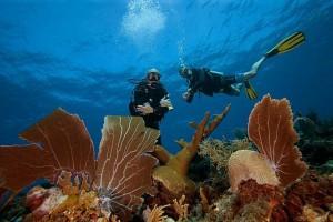 Duikvakantie Bonaire Wannadive vakantieduiker reefview w 2 'crazy' divers