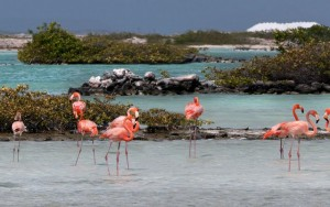Duikvakantie Bonaire btb vakantieduiker flamingo