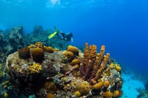 Duikvakantie Curacao Vakantieduiker c www.curacao.com braincoral