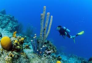 Duikvakantie Curacao Vakantieduiker c www.curacao.com duiker