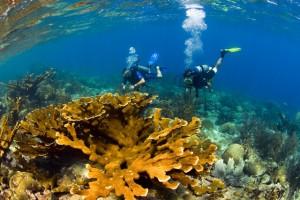 Duikvakantie Curacao Vakantieduiker c www.curacao.com duikers onderwater