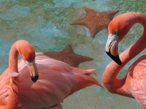 Duikvakantie Curacao Vakantieduiker c www.curacao.com sea aquarium