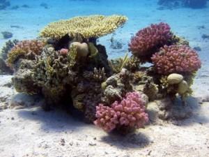 Duikvakantie Curacao Vakantieduiker koraaltuin