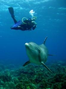 Duikvakantie Curacao vakantieduiker lions dive dolfijn