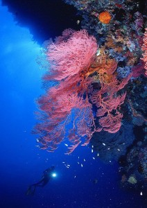 Duikvakantie Indonesie Manado duiken bunaken thalassa Koraal vakantieduiker