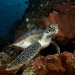Duikvakantie Manado Indonesië Murex Dive Resort - Vakantieduiker