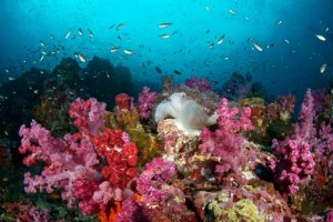 Duikvakantie Thailand Similan eilanden en richelieu-rock-78 vakantieduiker