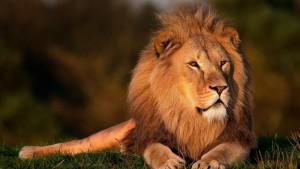 Duikvakantie vakantieduiker en safari Lion Kruger NP