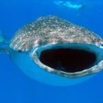 Combi-reis Zuid-Afrika Kruger Park en Mozambique duiken en safari