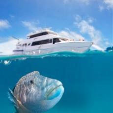 Duikvakantie Australië Great Barrier Reef - Vakantieduiker