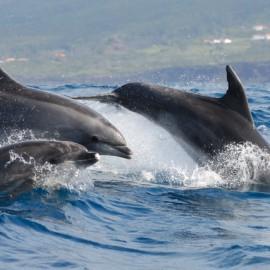 Duikvakantie Azoren - Vakantieduiker