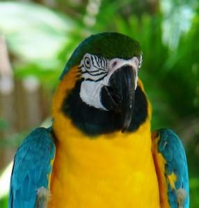 duikvakantie belize vakantieduiker papegaai