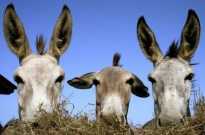 Groepsreis Duikvakantie Bonaire vakantieduiker ezels
