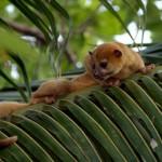 Duikvakantie Belize en Rondreis Natuur Cultuur en Duiken