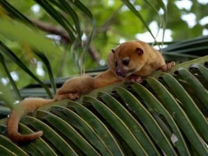 duikvakantie jungle belize exsus vakantieduiker 2