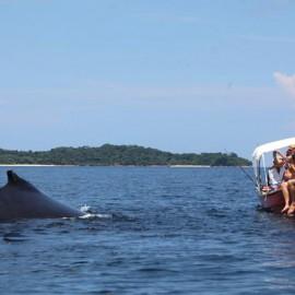 Duikvakantie en Rondreis Panama - Combi Natuur, Cultuur & Duiken
