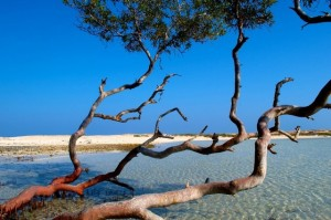 mangroves lahami willie nidermayr duikvakantie zuiden egypte vakantieduiker