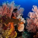 Duikvakantie Indonesie Pulau Weh/ Vakantieduiker