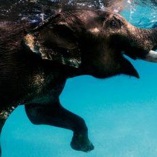 Duikvakantie Andamanen - India