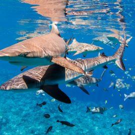 Duikvakantie Yap, Micronesië - Vakantieduiker