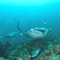 Groepsreis Duikvakantie Liveaboard Malediven Nautilus one